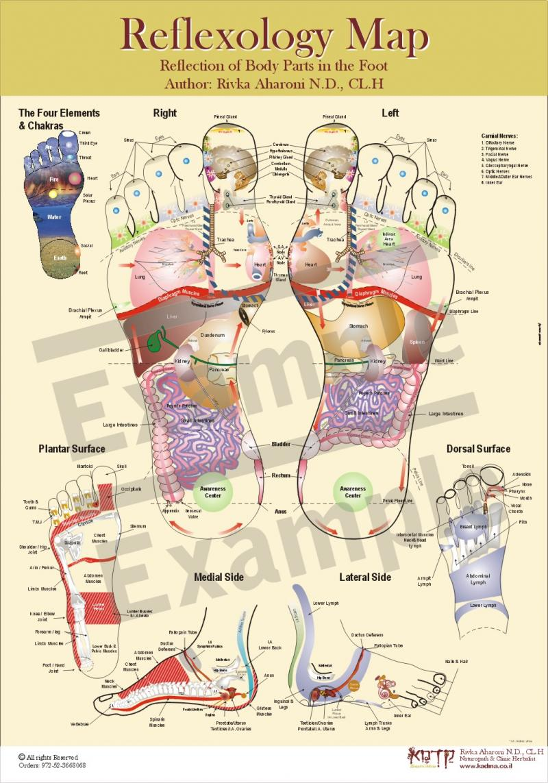 Reflexology Map 1