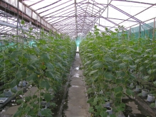 indonesia greenhouse java