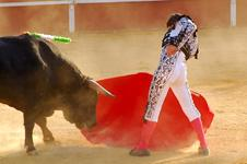 Bullfighting226X150 copy